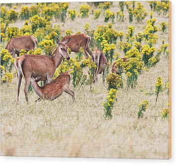 Deers Wood Print by MotHaiBaPhoto Prints