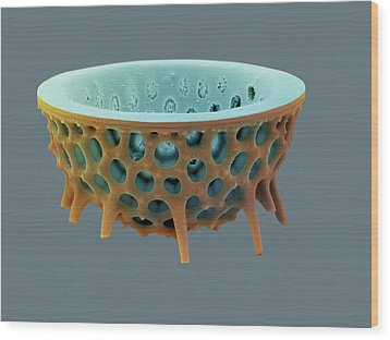 Diatom, Sem Wood Print by David Mccarthy