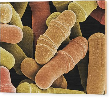 Dividing Yeast Cells, Sem Wood Print by Steve Gschmeissner