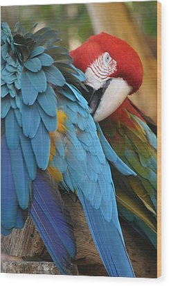 Feather By Feather Wood Print by Valia Bradshaw