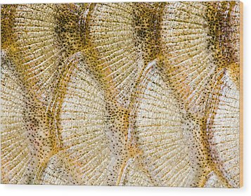 Fish Scales Background Wood Print by Odon Czintos