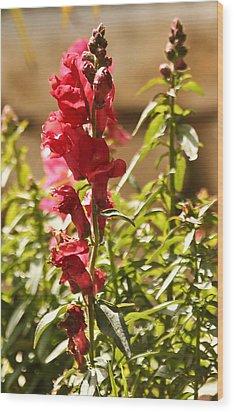 Flower Wood Print by Amr Miqdadi