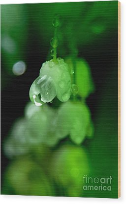 Flower And Drops Wood Print by Odon Czintos