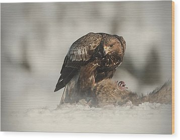 Golden Eagle Wood Print by Andy Astbury