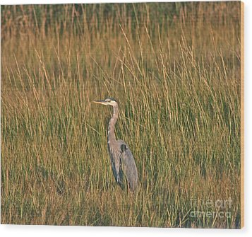 Wood Print featuring the photograph Great Blue Heron by Cindy Lee Longhini