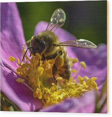 Honey Bee Wood Print by Brian Stevens