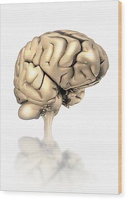 Human Brain, Artwork Wood Print by Victor Habbick Visions