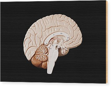 Human Brain Wood Print by Richard Newstead