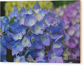 Hydrangea 4 Wood Print by Eva Kaufman