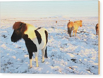 Wood Print featuring the photograph Iceland by Milena Boeva