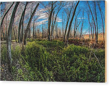 Illinois River Bottoms Wood Print by Kimberleigh Ladd