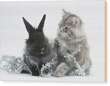 Kitten And Rabbit Getting Into Tinsel Wood Print by Mark Taylor