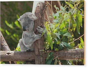 Koala Wood Print by Carol Ailles