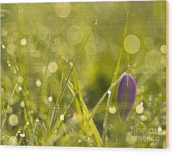Light Flowers Wood Print by Odon Czintos