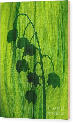Lily Of The Valley Wood Print by Odon Czintos