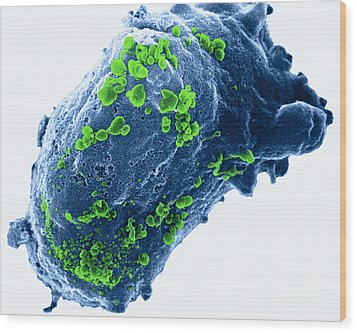 Lymphocyte With Hiv Cluster Wood Print by Science Source