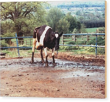 Mad Cow Disease Wood Print by Science Source