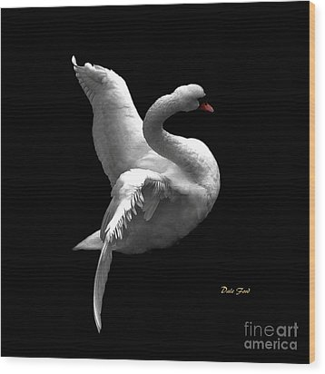 Majestic Swan 2 Wood Print