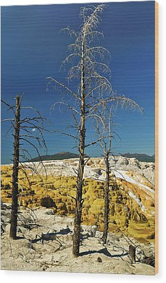 Mammoth Upper Terrace Wood Print by Greg Norrell