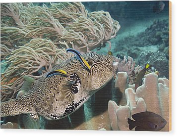 Map Pufferfish Wood Print by Georgette Douwma