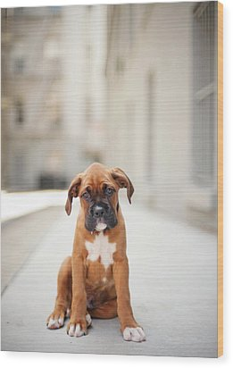 2 Month Old Boxer Puppy Standing In Alley Wood Print by Diyosa Carter