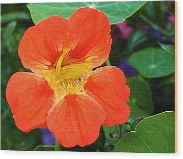 Orange Delight Wood Print by Bruce Bley