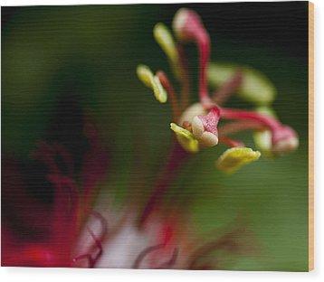 Passiflora Flower Wood Print by Zoe Ferrie