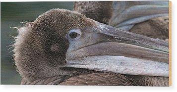Pelican Wood Print by Paul Marto