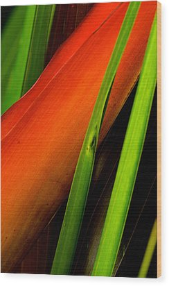 Photograph Of A Parrot Flower Heliconia Wood Print