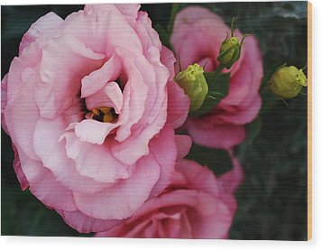 Pink Delight Wood Print by Bruce Bley