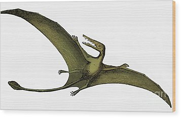 Pterodactyl Extinct Flying Reptile Wood Print by Science Source
