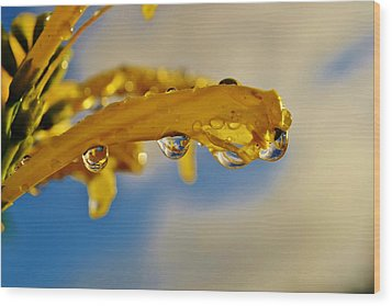 Wood Print featuring the photograph Raindrops On Blossom by Werner Lehmann