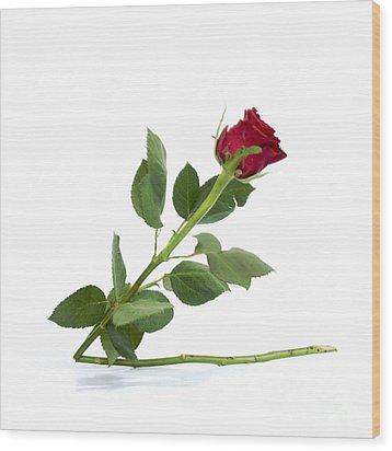 Red Tulip Wood Print by Bernard Jaubert