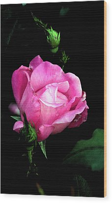 Regal Rose Wood Print by Karen Harrison