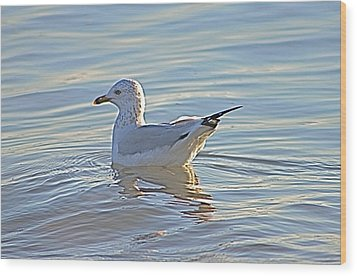 Ring-billed Gull Wood Print by Jeanne Kay Juhos