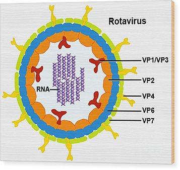 Rotavirus Wood Print by Science Source