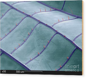 Sem Of Dragonfly Wing Wood Print by Ted Kinsman