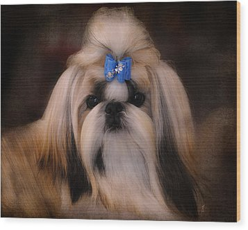 Shih Tzu Wood Print by Jai Johnson