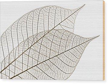 Skeleton Leaves Wood Print by Elena Elisseeva