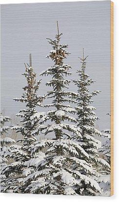 Snow Covered Evergreen Trees Calgary Wood Print by Michael Interisano