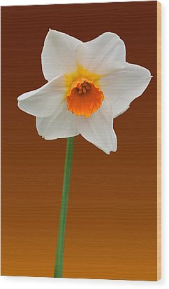 Spring Bulb Wood Print by Matthew Bamberg