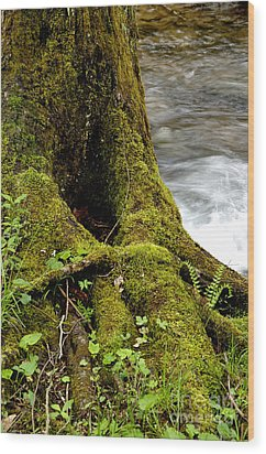 Spring Monongahela National Forest Wood Print by Thomas R Fletcher