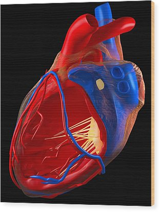 Structure Of A Human Heart, Artwork Wood Print by Roger Harris