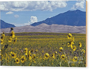 Sunflowers Sand N Sky Wood Print by Scotts Scapes