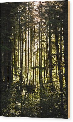 Untitled Wood Print by Kimberly Deverell