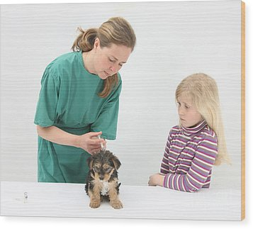 Vet Giving Pup Its Primary Vaccination Wood Print by Mark Taylor