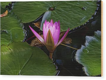 Water Lily Wood Print by Robert Ullmann