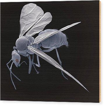 Winged Ant, Sem Wood Print by Steve Gschmeissner
