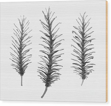 X-ray Of Pine Cones Wood Print by Ted Kinsman