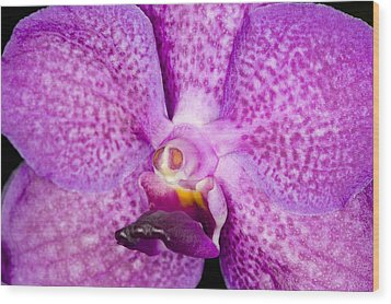 Wood Print featuring the photograph Exotic Orchid Flower by C Ribet